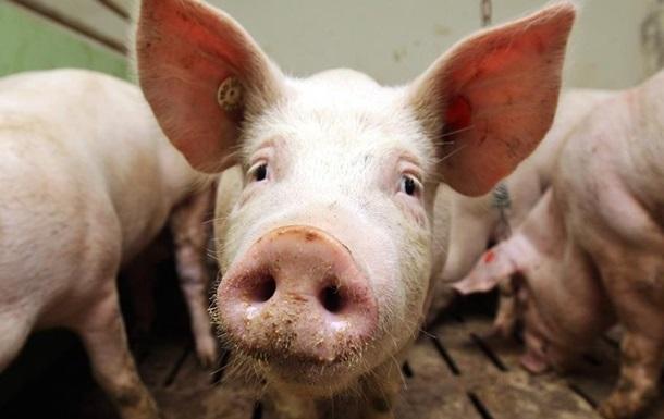 Вспышки чумы свиней зарегистрированы еще в двух областях