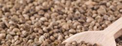 Целебные снадобья из семян конопли