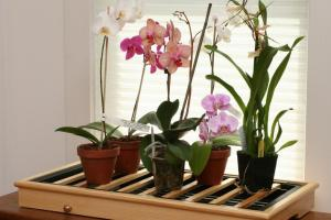Как ухаживать за орхидеей. Советы для новичков