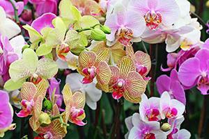 Как правильно выращивать орхидею