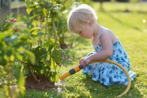 Как правильно поливать растения на даче: учитываем погоду и температуру воды