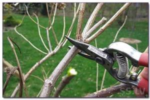 Почему все более востребованными становятся услуги по уходу за садами?