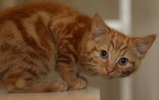 Жителя Луцка приговорили к тюрьме за мучения котенка