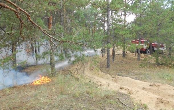 Пожары в лесах Херсонщины вызваны поджогами − глава ОГА