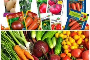 Как правильно выбирать и где покупать посевной и посадочный материал
