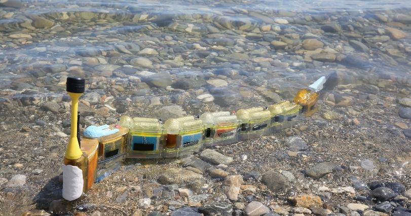 Модульный роботизированный угорь охотится на источники загрязнения воды