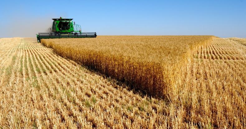 Санкции и неблагоприятные условия для земледелия в США дают России преимущество в экспорте пшеницы