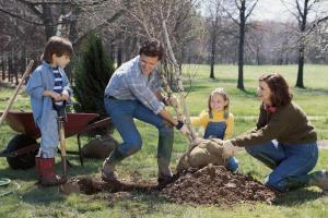 Перечень необходимых работ в саду и на участке в марте