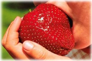 Крупные сорта клубники: тонкости выращивания