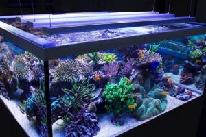 LED светильник для аквариума — экономичность, долговечность и надежность
