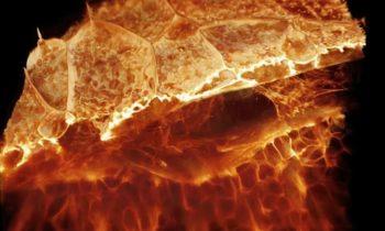 Новый микроскоп позволяет увидеть невероятные подробности функционирования живой клетки в 3D формате