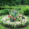 Выбор растения для украшения клумбы