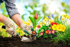 Как оформить цветочную клумбу на даче или возле дома