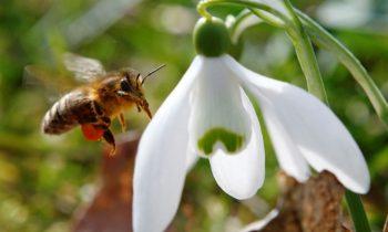 Летающие боты размером с пчелу становятся реальностью