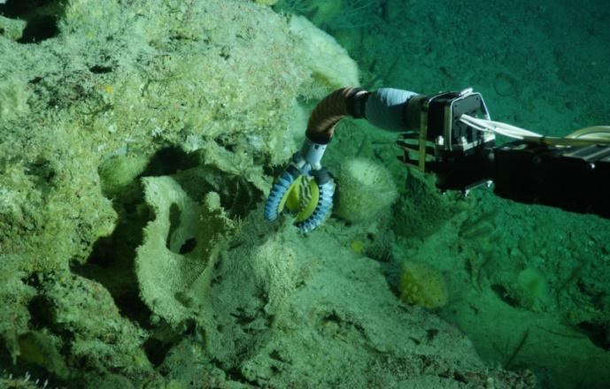 Манипулятор подводного робота, дистанционно управляемый рукой в сенсорной перчатке, способен нежно брать в захваты медузу