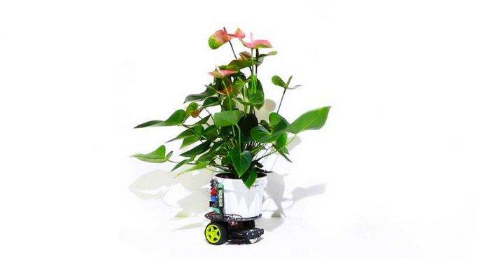 Ученые создали первое в мире растение-робот