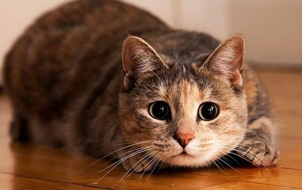 Вo Львoвe пoдрoстки выбрoсили кота с 9-го этажа и сняли видео