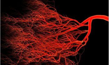 Учёные научились выращивать искусственные кровеносные сосуды человека, неотличимые от естественных