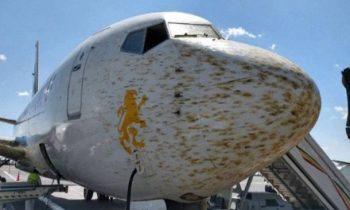 В Эфиопии самолет не смог приземлиться из-за облака саранчи