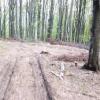 На Закарпатье СБУ пресекла крупное хищение лесов