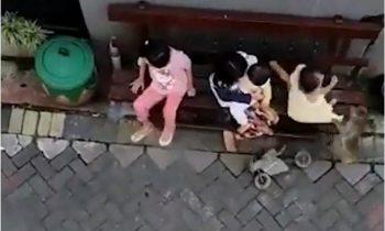 Обезьяна на мотоцикле пыталась украсть ребенка