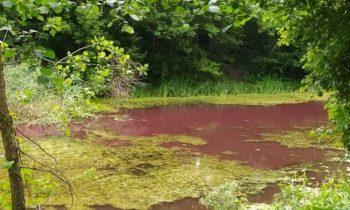 На Черниговщине водоем стал розовым по неизвестным причинам