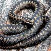 Число пострадавших от змей снизилось втрое