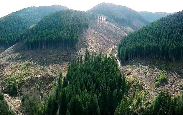 В Украине ухудшается состояние лесов