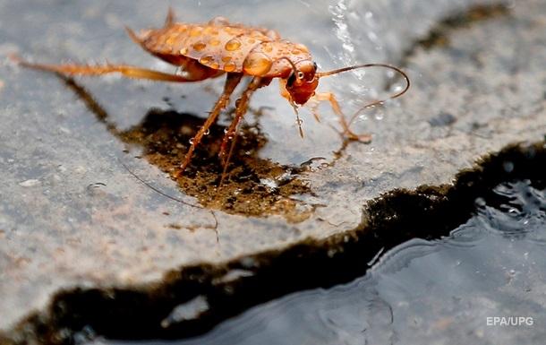 Зоопарк в Техасе предлагает назвать тараканов именами бывших или босса