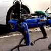 Собака-робот патрулирует улицы Бронкса
