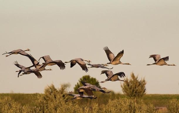Названа причина смерти птиц в заповеднике на Херсонщине